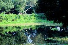 Foresta della mangrovia di Sundarban Fotografia Stock