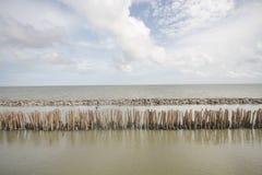 Foresta della mangrovia e cielo nuvoloso, mare dell'oceano con il bastone di bambù dell'albero fatto a mano continuo della barrie fotografie stock libere da diritti