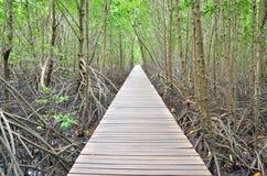 Foresta della mangrovia e del ponte di legno Immagine Stock