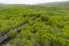 Foresta della mangrovia ed il ponte Fotografia Stock Libera da Diritti