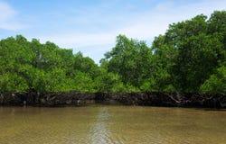 Foresta della mangrovia, Indoneisa Fotografie Stock Libere da Diritti