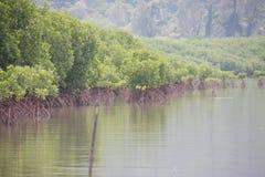Foresta della mangrovia, la terra agli ecosistemi marini immagini stock libere da diritti