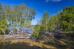 Foresta della mangrovia sull'isola di Curieuse, Seychelles Immagini Stock