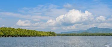 Foresta della mangrovia in Tailandia fotografia stock libera da diritti