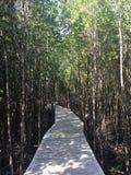 Foresta della mangrovia in Trat Tailandia fotografia stock