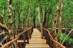 Foresta della mangrovia a Zanzibar Fotografia Stock