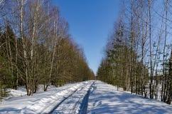 Foresta della molla di marzo Immagine Stock