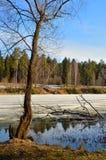 Foresta della molla di marzo Fotografie Stock