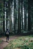 Foresta della molla e del viaggiatore in montagne fotografia stock