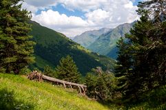 Foresta della montagna fotografia stock libera da diritti