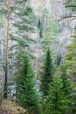 Foresta della montagna. Immagini Stock