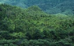 Foresta della montagna immagini stock