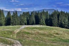 Foresta della montagna Fotografie Stock Libere da Diritti