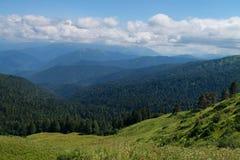 Foresta della montagna Immagini Stock Libere da Diritti