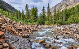 Foresta della montagna al piccolo fiume siberiano Fotografia Stock Libera da Diritti