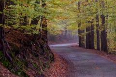 Foresta della montagna che curva strada sotto le foglie variopinte dell'autunno Fotografia Stock
