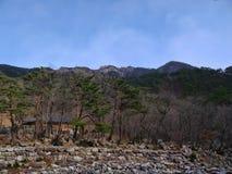 Foresta della montagna in Corea del Sud Fotografia Stock