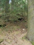 Foresta della montagna di Erz fotografie stock