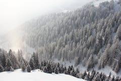 Foresta della montagna di inverno Fotografia Stock Libera da Diritti