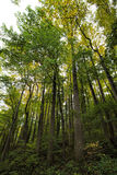 Foresta della montagna di Rocky Lush Green Great Smoky immagine stock libera da diritti