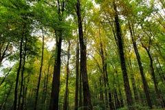 Foresta della montagna di Rocky Lush Green Great Smoky fotografia stock