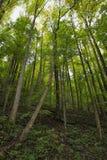 Foresta della montagna di Rocky Lush Green Great Smoky fotografie stock