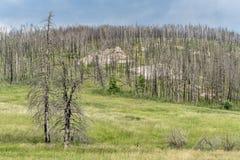 Foresta della montagna dopo l'incendio violento Immagine Stock Libera da Diritti