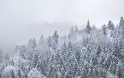 Foresta della montagna in nebbia densa di inverno Immagini Stock
