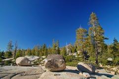 Foresta della montagna in primavera Immagini Stock Libere da Diritti