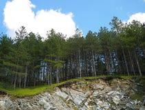 Foresta della montagna in Serbia, Mokra Gora fotografie stock libere da diritti