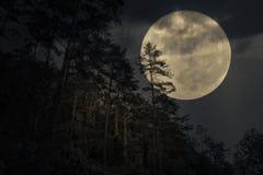 Foresta della montagna in una notte della luna piena Fotografie Stock Libere da Diritti