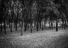 Foresta della natura Immagine Stock