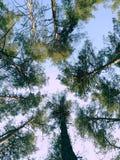 Foresta della natura Fotografie Stock