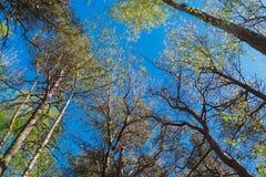 Foresta della natura, alberi che crescono verso l'alto al sole fotografia stock libera da diritti