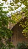 Foresta della natura e costruzione di ponte moderna Fotografia Stock