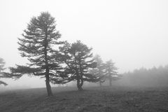 Foresta della nebbia Immagine Stock