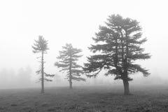 Foresta della nebbia Immagini Stock