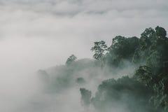 Foresta della nebbia al bosco in Tailandia Fotografie Stock Libere da Diritti