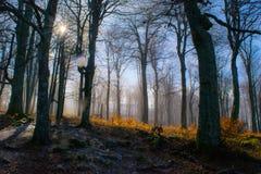 Foresta della nebbia di mattina Fotografia Stock