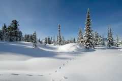 Foresta della neve Fotografie Stock Libere da Diritti
