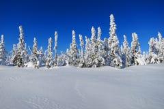 Foresta della neve Immagine Stock Libera da Diritti