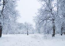 Foresta della neve Immagini Stock Libere da Diritti
