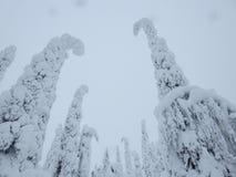 Foresta della neve Immagini Stock