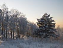 Foresta della neve di inverno con il sole immagine stock