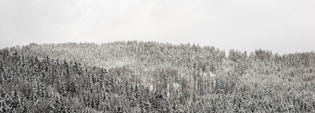 Foresta della neve di panorama Immagini Stock Libere da Diritti