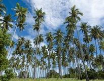 Foresta della noce di cocco Fotografia Stock Libera da Diritti