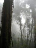 Foresta della nube Immagini Stock