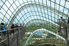 Foresta della nube, giardini dalla baia Fotografia Stock Libera da Diritti