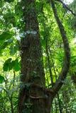 Foresta della nuvola in Costa Rica Fotografia Stock Libera da Diritti
