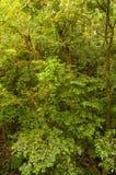Foresta della nuvola, Costa Rica Immagine Stock